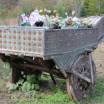 flowers in wheel barrel